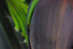 Abstrakta Bananowy kwiat Zamazujący zakończenie Up Obrazy Stock