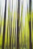 Abstrakta begreppet av trädet arkivbild