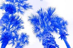 Abstrakta blåa palmträd Royaltyfria Foton