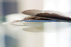 Abstrakta blåa Jay Feathers Royaltyfri Foto