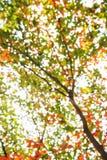 Abstrakta Bokeh av trädfärgbakgrund Royaltyfria Foton