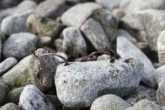 Abstrakta detaljer för slut om sumealgväxter på en vagga surfar upp Fotografering för Bildbyråer