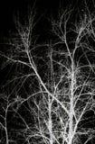 Abstrakta gałęziasty silhoutte Zdjęcie Stock