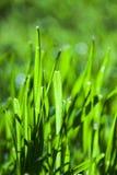 Abstrakta gräsblad Royaltyfria Bilder