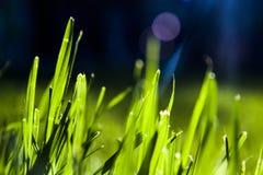 Abstrakta gräsblad arkivfoton