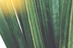 Abstrakta gröna palmblad med regndroppe arkivbild