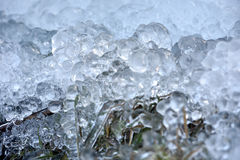 Abstrakta iskristaller på djupfrysta växter Arkivfoton
