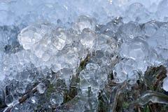 Abstrakta iskristaller på djupfrysta växter Arkivfoto