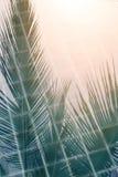Abstrakta kokosnötsidor som reflekterar på simbassängyttersida Royaltyfri Bild