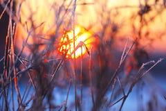 Abstrakta konturer av växter i frosten på solnedgången Arkivfoton