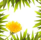 abstrakta kwiecisty graniczny Fotografia Stock