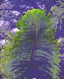 Abstrakta liścia Zielona Wielka ilustracja - jodła lub sosna obrazy stock