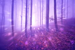 Abstrakta ljus för fantasi i skoglandskap Arkivfoto