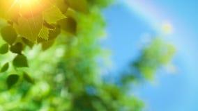 Abstrakta naturliga bakgrunder för vår och för sommar Arkivbilder