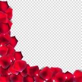 Abstrakta naturliga Rose Petals på realistisk genomskinlig bakgrund stock illustrationer