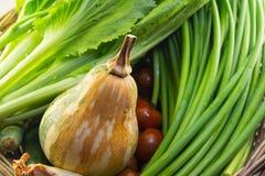 Abstrakta nya organiska grönsaker, pumgin, tomat och vitlökchiv Royaltyfri Fotografi