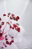 Abstrakta röda växter på vit bakgrund Royaltyfria Bilder