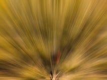Abstrakta radiella linjer bakgrund Royaltyfri Bild