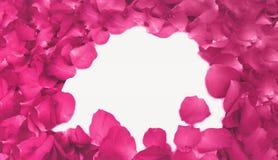 Abstrakta rosa Rose Petals, som ramen använde, som mallen med mjuk fokusfärg filtrerade bakgrund Arkivbild