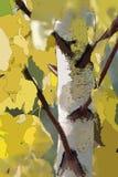 abstrakta rosjanin krajobrazu Zdjęcie Royalty Free