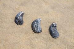 Abstrakta snäckskal på stranden Royaltyfria Bilder