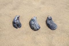 Abstrakta snäckskal på stranden Fotografering för Bildbyråer