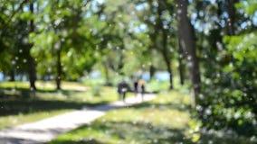 Abstrakta suddiga bakgrunder som fotvandrar slingan i den lövrika gräsplanen stock video