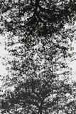 Abstrakta svartvita trädträd Royaltyfri Foto