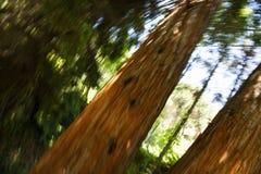 Abstrakta träd Royaltyfria Bilder