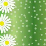 Abstrakta vita Daisy Flowers i Gradated gräsplanbakgrund vektor illustrationer