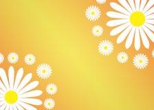 Abstrakta vita Daisy Flowers i Gradated och texturerad gul bakgrund vektor illustrationer