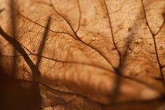 Abstrakta wzór jesień liść Makro- widok Zdjęcie Royalty Free