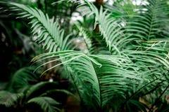 Abstrakta wzór z zielonym liścia zakończeniem up w szklarni Fotografia Royalty Free
