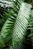 Abstrakta wzór z zielonym liścia zakończeniem up w szklarni Obraz Stock