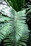 Abstrakta wzór z zielonym liścia zakończeniem up w szklarni Obraz Royalty Free