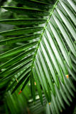 Abstrakta wzór z zielonym liścia zakończeniem up w szklarni Zdjęcia Stock