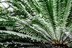 Abstrakta wzór z zielonym liścia zakończeniem up w szklarni Zdjęcie Stock