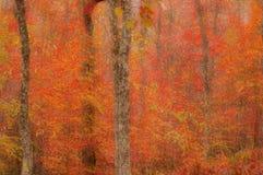 Abstrakta zamazany tło. Jesieni drzewa Obrazy Royalty Free
