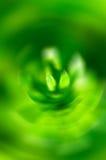 Abstrakta zieleń zamazujący kwiat Fotografia Royalty Free