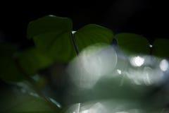 abstrakta zielone liści, Fotografia Royalty Free