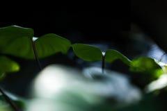 abstrakta zielone liści, Fotografia Stock