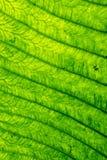 abstrakta zielone liści, Zdjęcia Stock