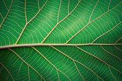 abstrakta zielone liści, Obraz Royalty Free