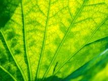 abstrakta zielone liści, Zdjęcie Royalty Free
