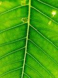 Abstrakta zielony leaf& x27; s tekstura zdjęcie stock