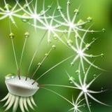 Abstrakta zielony tło z kwiatu dandelion ilustracja wektor