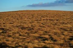 Abstrakte Abbildung des Hügels mit brauner Vegetation Stockbild