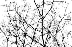 Abstrakte Abbildungen der Zweige Lizenzfreies Stockfoto
