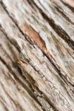 Abstrakte alte Baumrindebeschaffenheit Lizenzfreies Stockbild