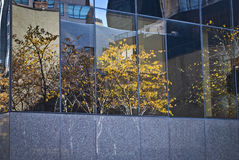 Abstrakte Bäume Lizenzfreies Stockfoto